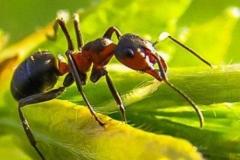 formiche-insetti-infestanti