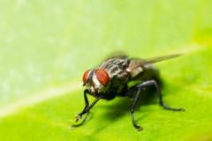 come-disinfestare-mosche