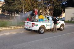 disinfestazioni-processionaria-roma