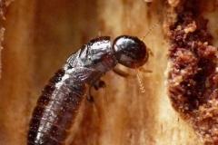disinfestazione-termiti-roma