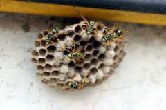 nido-vespe